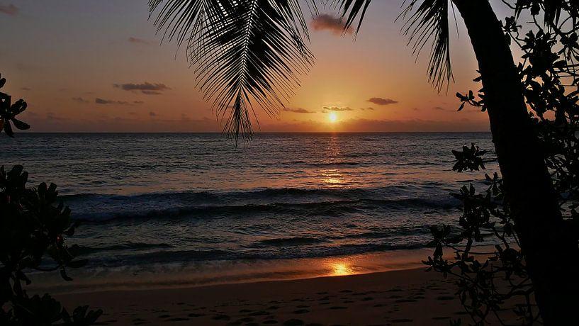 Dromerige zonsondergang onder palmbomen op het strand Anse Takama van Timon Schneider