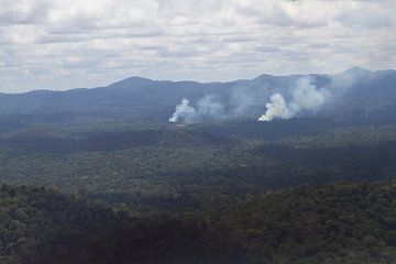 Der tropische Regenwald im Süden Surinams von rene marcel originals
