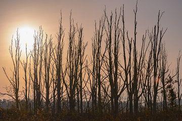 kahle Bäume unter der Sonne von Tania Perneel