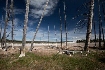 Bomen bij een zwavelbron in Yellowstone van Hans Jansen