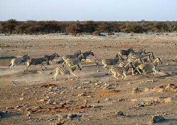 Fliehende Zebras von Merijn Loch