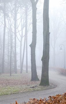 mistig bos van Karin vanBijleveltFotografie