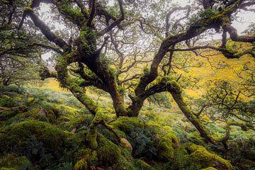 Der Geruch von Erde und Alter von Joris Pannemans - Loris Photography