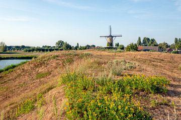 Rand eines niederländischen Dorfs in der Sommersaison von Ruud Morijn