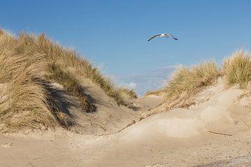 Strand und Dünen von Tonny Visser-Vink