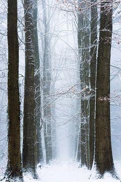 Winter gewinnt. von Inge Bovens
