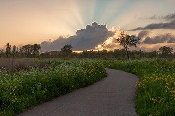 Sonnenuntergang zwischen den Cowslips. von Willemke de Bruin