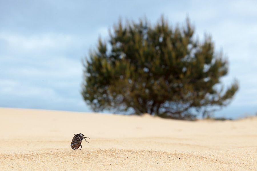 Insect op het strand