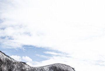 Zwart paard met witte stippels van Wendy Boon