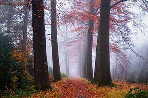 Strahlender Segen von Tvurk Photography