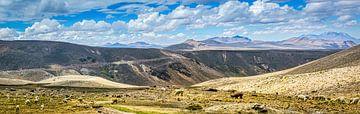 Troupeau de lamas sur le plateau des Andes, au Pérou sur Rietje Bulthuis