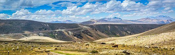 Kudde lama's op de hoogvlakte van de Andes, Peru