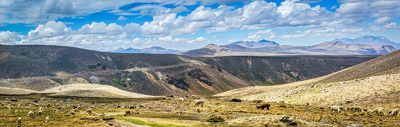 Kudde lama's op de hoogvlakte van de Andes, Peru van Rietje Bulthuis