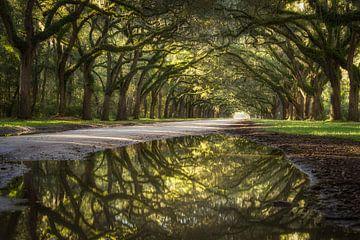 Reflection of oak avenue sur Edwin Mooijaart