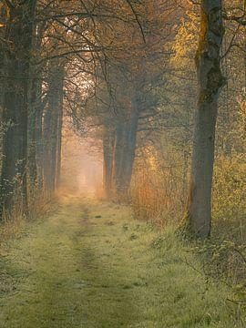 Waldweg II von Diane van Veen