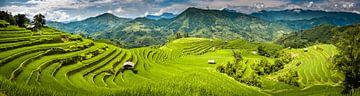 Panorama van rijstvelden van Jeroen Mikkers