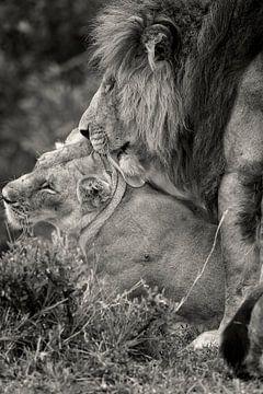 Liebe zwischen zwei Lions während der Hochzeitstage. von Louis en Astrid Drent Fotografie