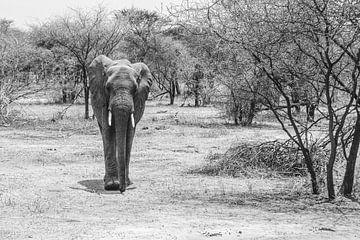 Un éléphant parmi les buissons en Tanzanie sur Mickéle Godderis