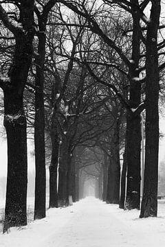 Weg entlang von Bäumen von Nynke Altenburg