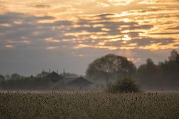 sfeervol graanveld van Tania Perneel