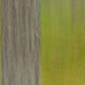 ICM Wald Detail von Kristof Lauwers