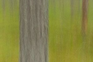 ICM bos detail van Kristof Lauwers