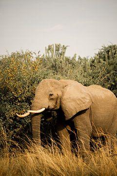 Olifant tijdens safari in Oeganda, Afrika van Laurien Blom