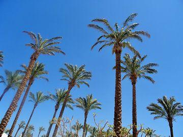 palm bomen in helder blauwe lucht sur Marleen De Wandeleer
