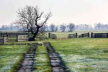 Nederlands polderlandschap met hekken, een rare boom en een spoor ernaartoe van Peter de Kievith Fotografie