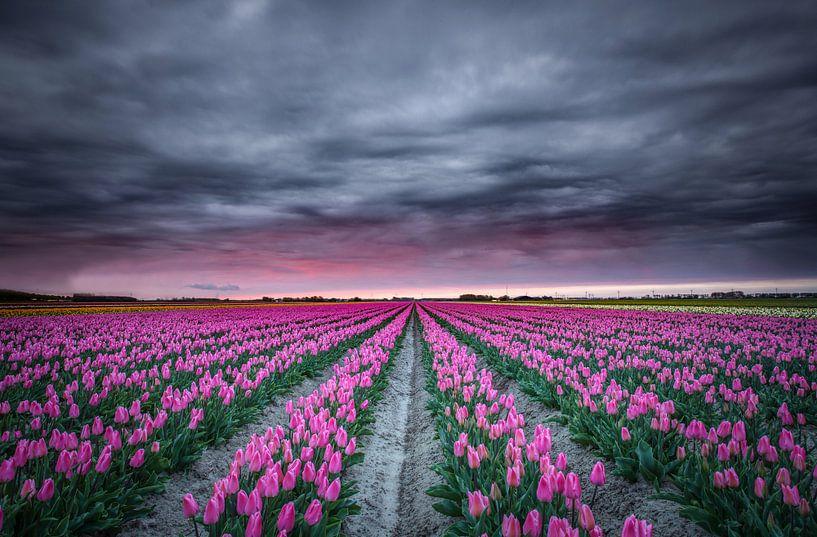 Tulpenveld in bloei van Jeffrey Groeneweg