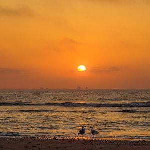 Strand, zee en zon