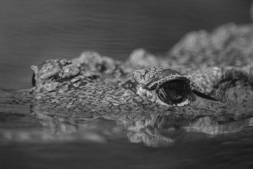 In het oog van de Krokodil (Zwart Wit)