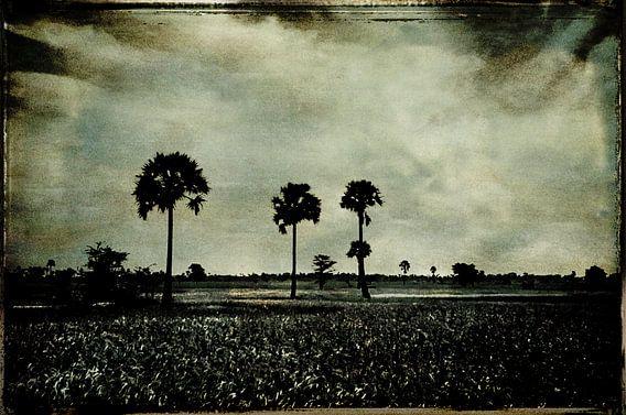 palms van sophie etchart