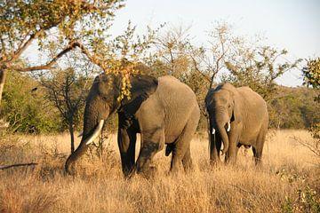 Elefanten von Chris Gottenbos