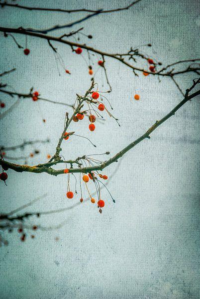 Winterse misleiding van Arja Schrijver Fotografie
