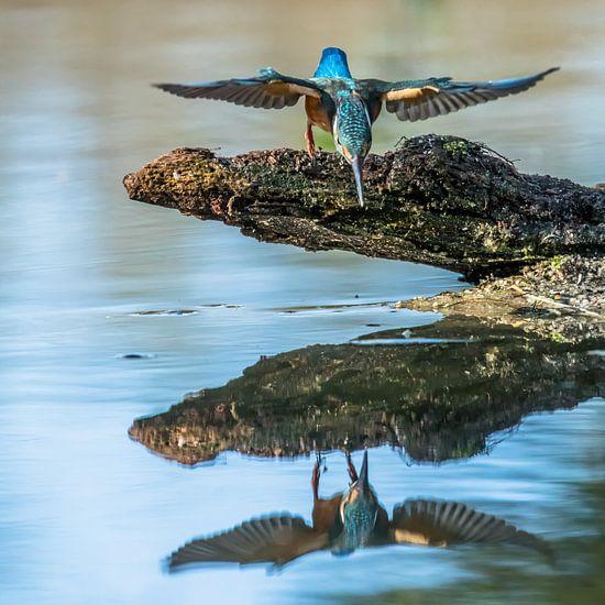 IJsvogel van Linda Raaphorst