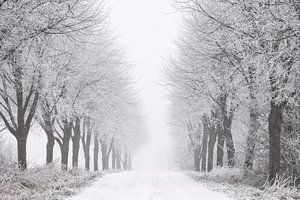 Winter in Zeeland von Frank Peters