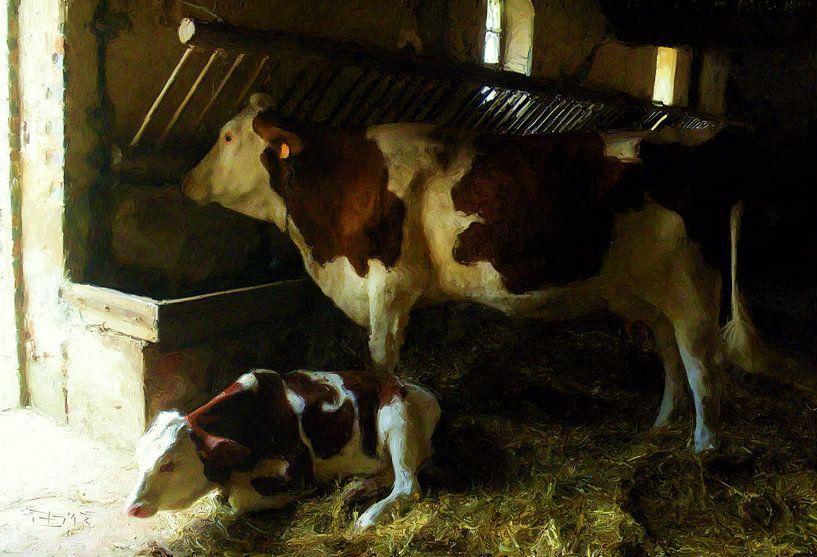 Koeien op stal van Frans Jonker