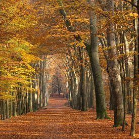 Forêt de hêtres à Ede (Pays-Bas) sur Eric Wander