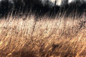Grassen van goud