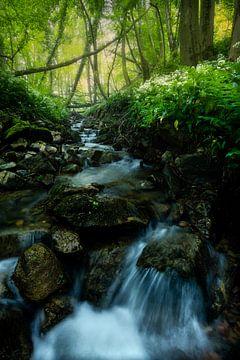 Kleine waterval en daslook in de bossen van Zuid-Limburg. van Jos Pannekoek