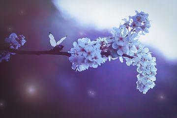Witte bloesem en vlinder van Jessica Vreede