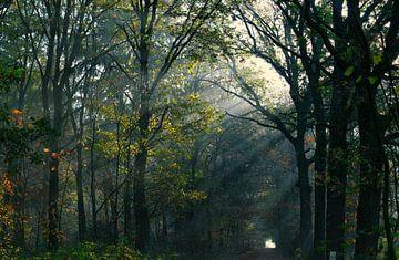 Herbstmorgen von Joran Quinten