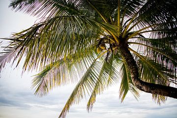 Palmiers en Thaïlande sur Lindy Schenk-Smit