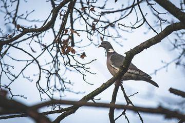 Ringeltaube in einem Baum von Marjolijn Barten