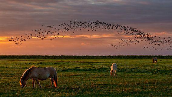Konikpaarden op de Slikken en vogels boven  het natuurgebied  van Bram van Broekhoven