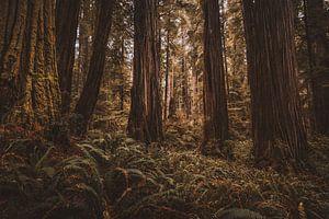Het hart van het bos van