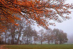 Overvloedig oranje van Tvurk Photography