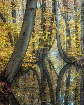 Traumhafte Reflektionen von Lars van de Goor