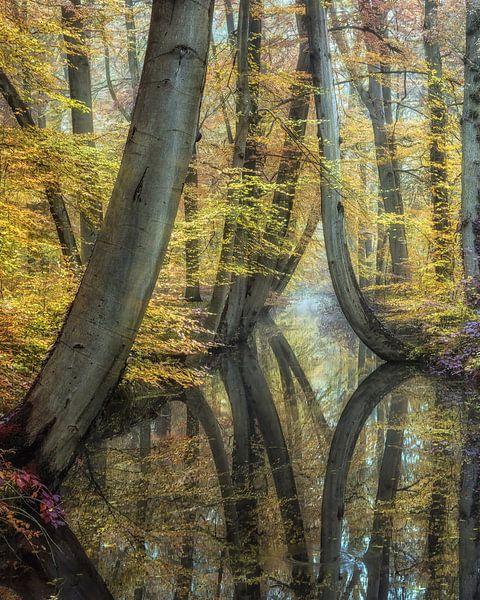 Dreamy Reflections van Lars van de Goor